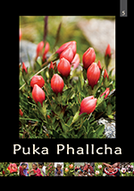 Folleto 5: Puka Phallcha
